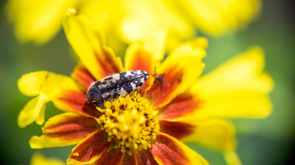 Yellow Wildflower close up
